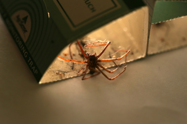 Spider trap2