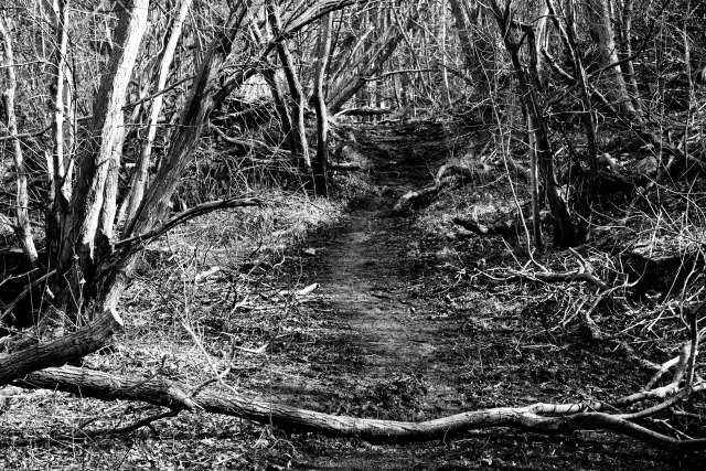 Springwater Park Pathway